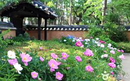 그녀들의 이야기, 문화와 예술의 클래식 로드 강릉