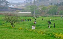 축제의 봄
