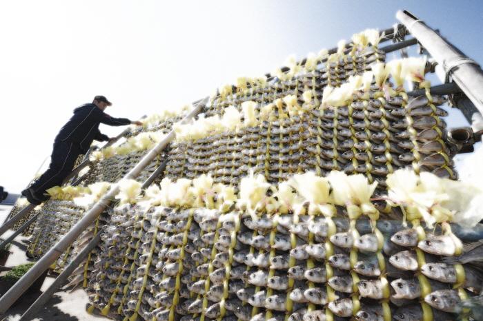 곡우사리 영광굴비축제 2019