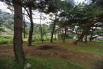 광주동솔밭