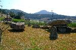 읍리지석묘와 하마비