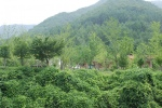 장령산자연휴양림(구, 장용산자연휴양림)