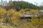 양평 산수유 농어촌 인성학교