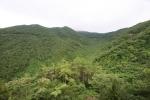 천관산 동백생태숲
