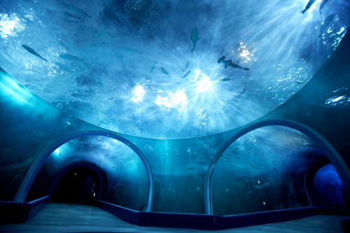 Image result for 韩华Aqua Planet