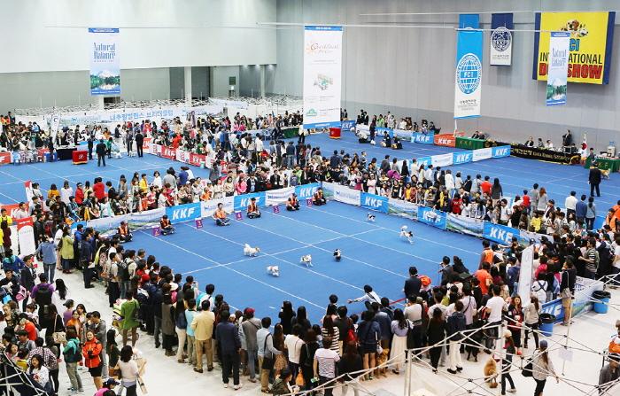 FCI 아시아, 아프리카 & 오세아니아 섹션쇼 KKF 펫 페스티벌 2019
