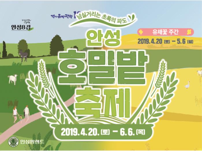 안성 호밀밭축제 2019