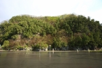 대구 도동 측백나무 숲
