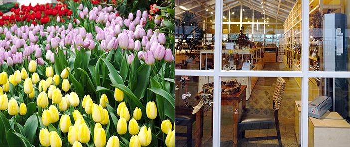 韓國~四季如春的溫室植物園