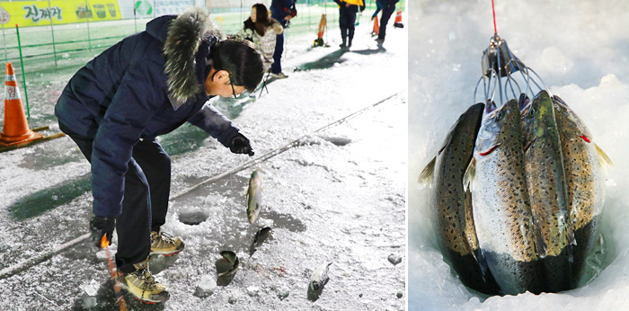 Visitor enjoying ice fishing (left) / Sancheoneo caught at the ice fishing site (right)