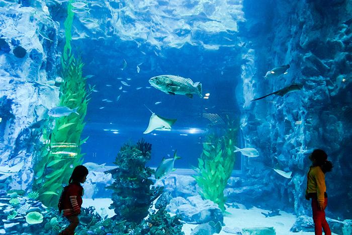 圖片) 樂天世界水族館