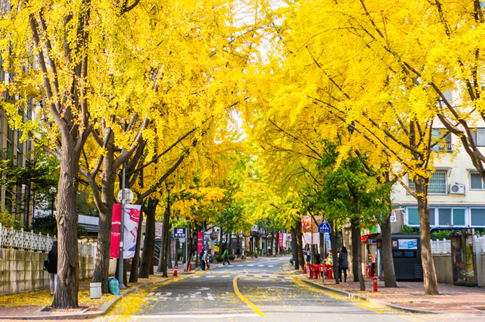 Image result for samcheongdong autumn