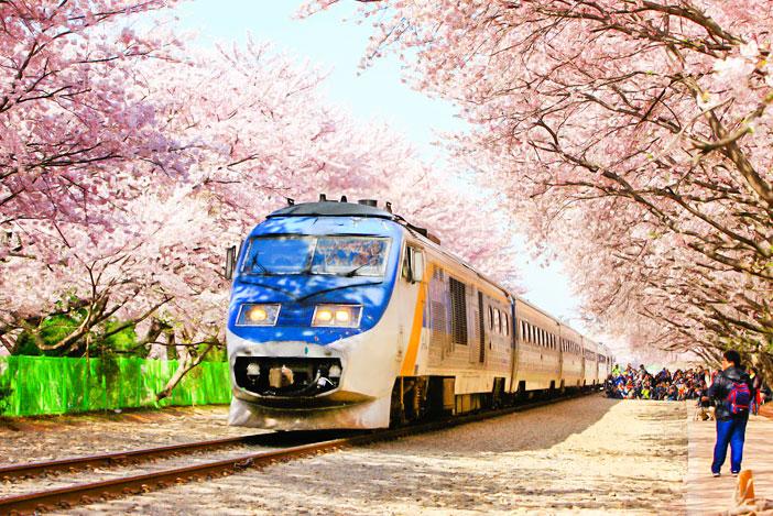『一日玩韓國』2017年韓國春季(3月~5月)其它慶典活動